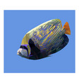 low poly style angelfish on blue background vector image vector image