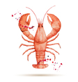 Watercolor lobster vector image vector image