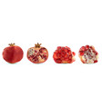 3d realistic pomegranate tropical fruit vector image vector image