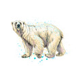abstract polar bear from a splash watercolor vector image vector image