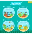 Aquarium set with fish and decoration Fishbowl vector image