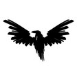 big black raven spread wings vector image
