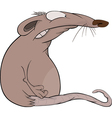 House rat vector image vector image
