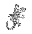 lizard jewelry sketch vector image vector image
