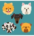 muzzle different breeds dogs vector image