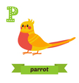 Parrot P letter Cute children animal alphabet in vector image vector image