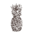 Pineapple hand drawn in sketch style isolated on vector image