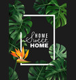realistic house plant frame background vector image vector image
