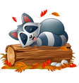 cartoon raccoon sleeping in the autumn weather vector image vector image
