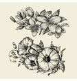 Flower Hand drawn sketch bindweed tutsan vector image vector image
