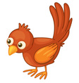 Red bird on white vector image vector image