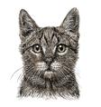 Cat 06 vector image vector image