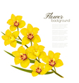 Holiday yellow flowers background vector image vector image