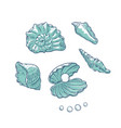 set sea shells and pearls different shapes vector image vector image
