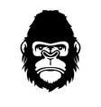 face gorilla isolated on white vector image