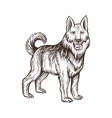 guard dog farm animal sketch isolated dog on the vector image