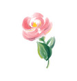 cute spring watercolor flower rose art vector image vector image