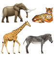 Four African animals vector image vector image