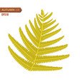autumn fern leaf isolated on a white background vector image vector image