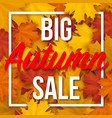 big autumn sale text on maple leaves background vector image vector image