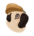 dog brown hat on white background vector image vector image