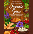 organic seasonings and spices vector image vector image
