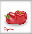 red sweet bulgarian bell pepper vector image vector image
