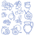 Set of spices berries and fruits vector image vector image