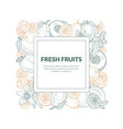 square frame from contours different fruits vector image vector image