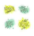 botanic organic herbal nature set handdrawn vector image vector image