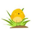 cute cartoon yellow chicken in grass vector image vector image