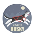 husky authentic vector image