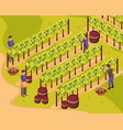 wine production background vector image vector image