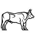 powerful horned bull vector image