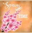 spring pink flowers sakura japan cherry tree vector image