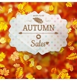 Autumn fall sale poster EPS 10 vector image