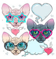 colorful icons cat in trendy glasses and a cat vector image vector image