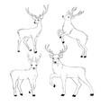 deer drawing vector image vector image