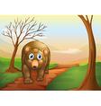 lonely bear walking