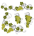 Set from the vine vector image