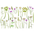 herb and field flowers greenery set vector image