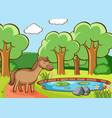 scene with brown horse pond vector image