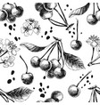 seamless pattern with hand drawn cherries vector image vector image