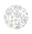 spring flowers circular shape wild meadow vector image
