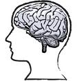 humab brain vector image