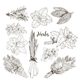 Collection of herbs vector image vector image