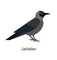 jackdaw isolated on white background smart vector image vector image