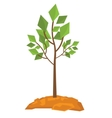 Large deciduous tree vector image