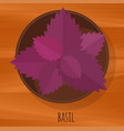 basil flat design icon vector image vector image