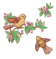 birds set 380 vector image vector image